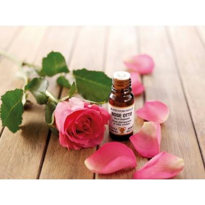 Amphora Aromatics 奧圖玫瑰 5%精油 (稀釋在95%葡萄籽油) 10ml