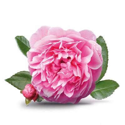 印度Attar Rose Grade A 大馬士革玫瑰A級5ml