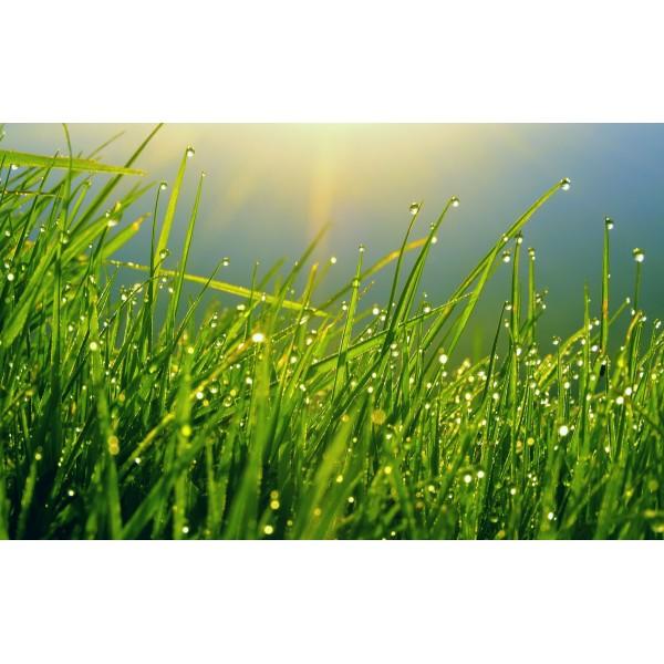 印度Attar Green Grass 綠草5ml